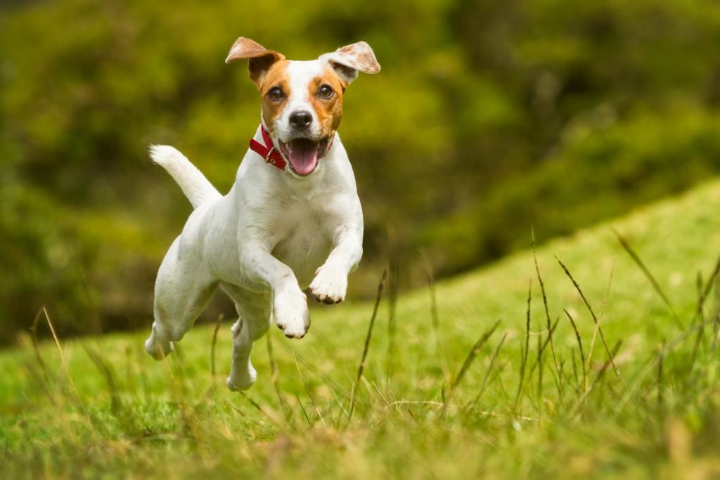 Dog running around in garden