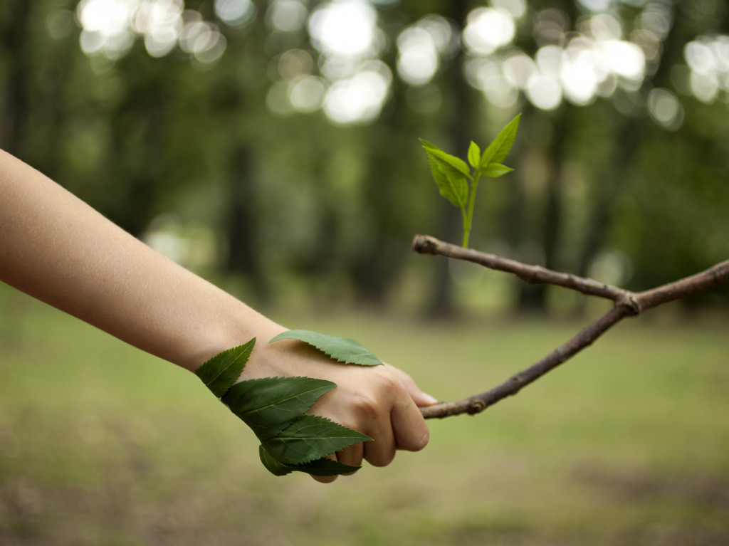 person holding a tree branch